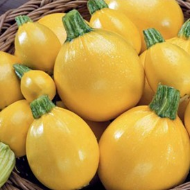Courgette ronde jaune One...