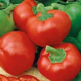 Poivron ou Piment tomate...