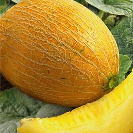 Melon Ananas