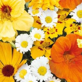 Mélange de fleurs d'été Bio
