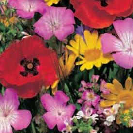 Mélange de fleurs Bio