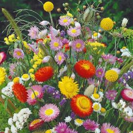 Mélange de fleurs Eternelles