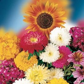 Mélange de fleurs annuelle...