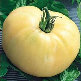 Tomate White Beauty