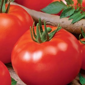 Tomate - Promyk